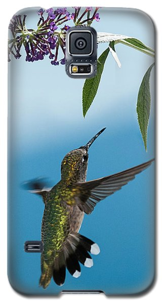 Blue Ridge Hummingbird Galaxy S5 Case
