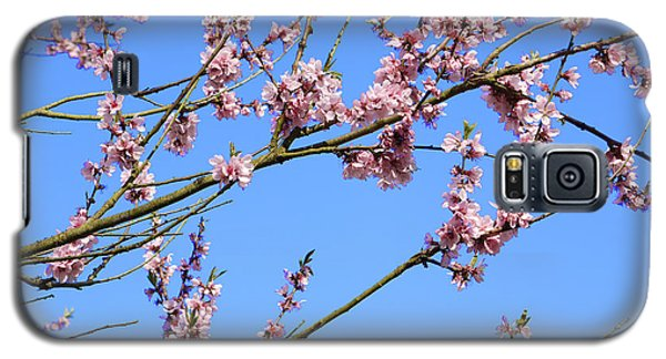 Blue Sky And Pink Blossom. Galaxy S5 Case