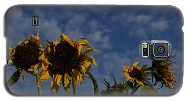 Galaxy S5 Case featuring the photograph Blue Sky Buddies by Brian Boyle