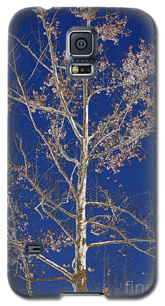 Blue Sky With A Twist Of Birch Galaxy S5 Case