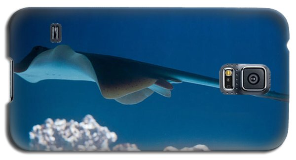 Galaxy S5 Case featuring the photograph Blue Spotted Fantail Ray by Eti Reid