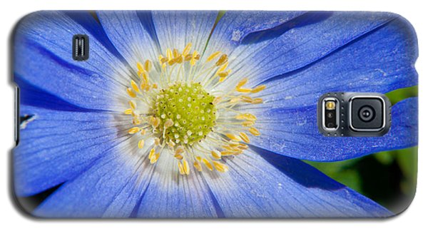 Blue Swan River Daisy Galaxy S5 Case by Tikvah's Hope