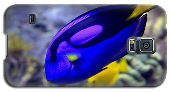 Blue Tang Dory Galaxy S5 Case