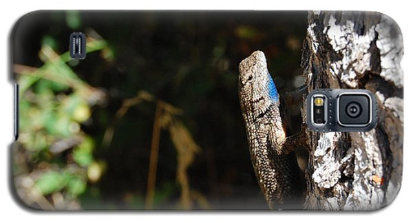 Galaxy S5 Case featuring the photograph Blue Throated Lizard 1 by Debra Thompson