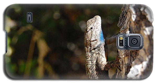 Galaxy S5 Case featuring the photograph Blue Throated Lizard 2 by Debra Thompson