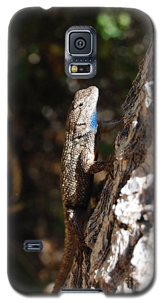 Galaxy S5 Case featuring the photograph Blue Throated Lizard 3 by Debra Thompson