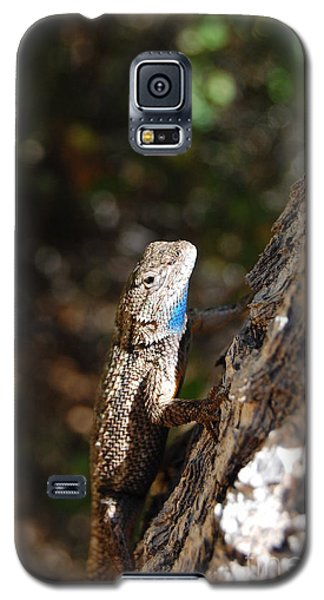 Galaxy S5 Case featuring the photograph Blue Throated Lizard 4 by Debra Thompson