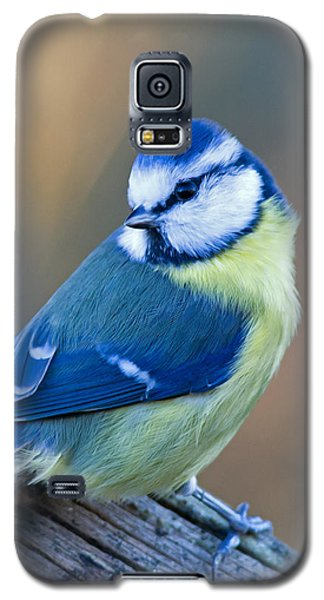 Blue Tit Looking Behind Galaxy S5 Case