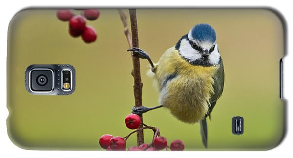 Galaxy S5 Case featuring the photograph Blue Tit With Hawthorn Berries by Liz Leyden