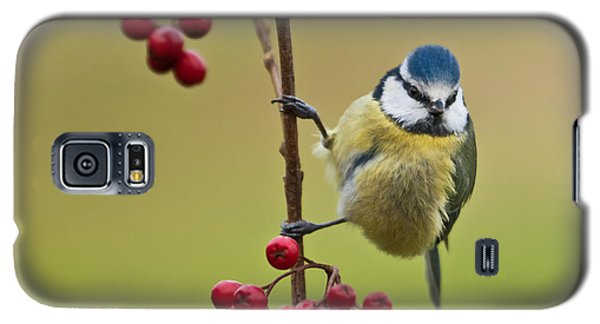 Blue Tit With Hawthorn Berries Galaxy S5 Case