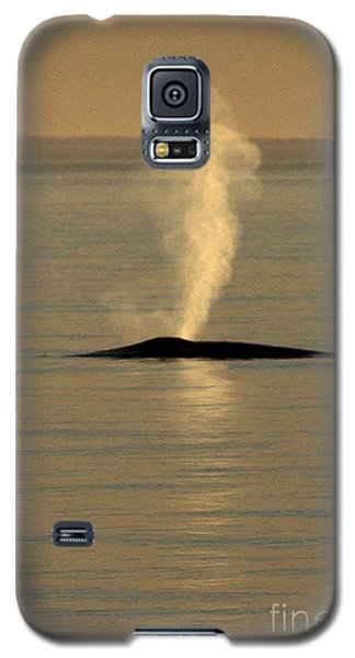 Galaxy S5 Case featuring the photograph Blue Whale At Sunset In Monterey Bay California  2013 by California Views Mr Pat Hathaway Archives