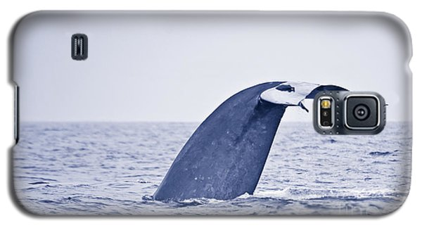 Galaxy S5 Case featuring the photograph Blue Whale Tail Fluke With Remoras by Liz Leyden