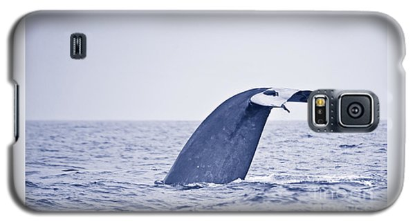 Blue Whale Tail Fluke With Remoras Galaxy S5 Case
