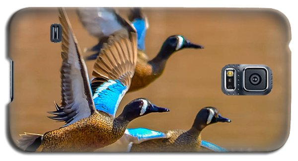 Galaxy S5 Case featuring the photograph Blue-winged Teals by Brian Stevens