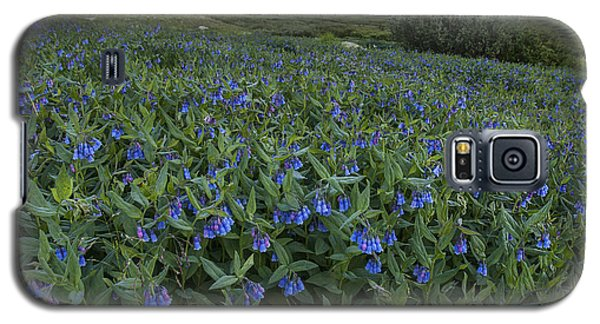 Bluebell Bounty Galaxy S5 Case by Morris  McClung