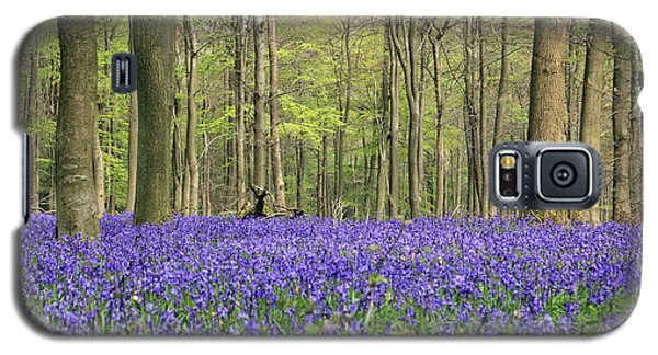 Bluebells Surrey England Uk Galaxy S5 Case