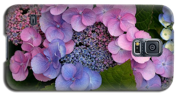 Blueberries And Cream Galaxy S5 Case by Living Color Photography Lorraine Lynch