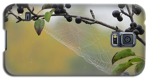 Galaxy S5 Case featuring the photograph Blueberry Web by Nikki McInnes