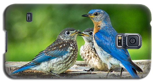 Bluebird - Father And Sons Galaxy S5 Case