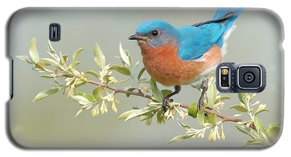 Bluebird Floral Galaxy S5 Case