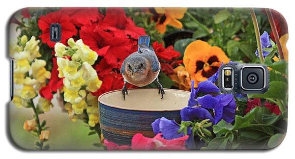 Bluebird Garden Galaxy S5 Case