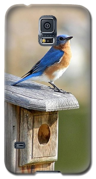 Galaxy S5 Case featuring the photograph Bluebird House Hunting by Jeanne Kay Juhos