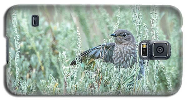 Bluebird In Sage Galaxy S5 Case by Yeates Photography