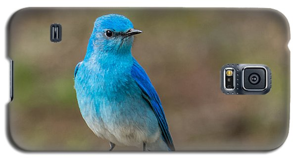 Bluebird In Yellowstone Spring Galaxy S5 Case by Yeates Photography