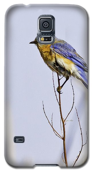 Bluebird Galaxy S5 Case