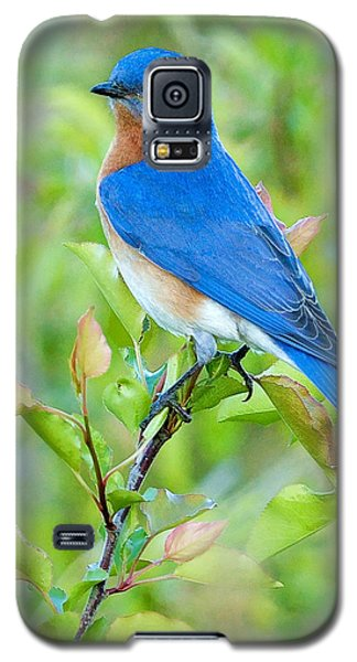 Bluebird Joy Galaxy S5 Case by William Jobes