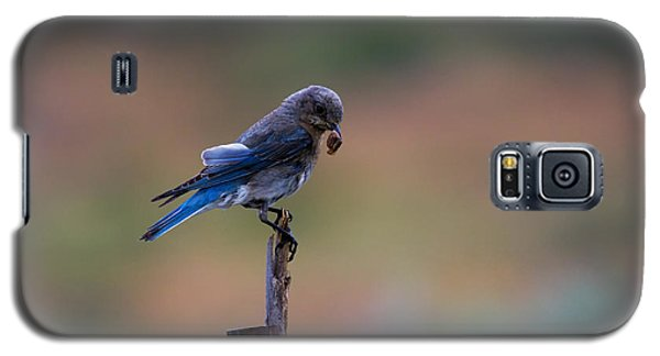 Bluebird Lunch Galaxy S5 Case by Mike  Dawson