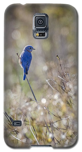 Bluebird Meadow Galaxy S5 Case