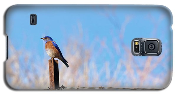 Bluebird On A Post Galaxy S5 Case by Mike  Dawson