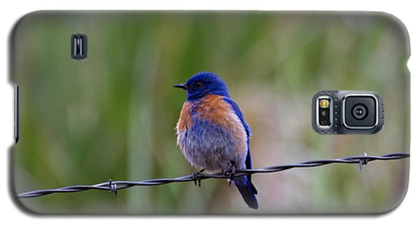 Bluebird On A Wire Galaxy S5 Case by Mike  Dawson