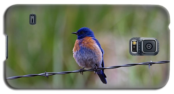 Bluebird On A Wire Galaxy S5 Case