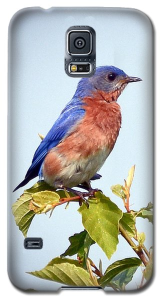 Galaxy S5 Case featuring the photograph Bluebird On Top by Kerri Farley
