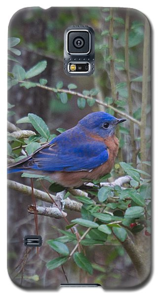 Galaxy S5 Case featuring the photograph Bluebird by Patricia Schaefer