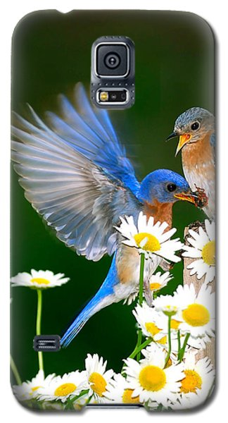 Bluebirds And Daisies Galaxy S5 Case