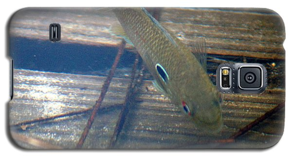 Bluegill On The Hunt Galaxy S5 Case by Kim Pate