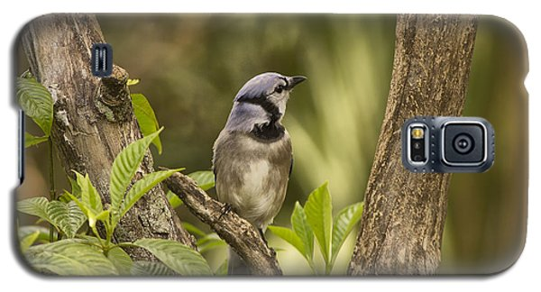 Galaxy S5 Case featuring the photograph Bluejay In Fork Of Tree by Anne Rodkin