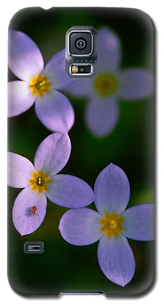 Galaxy S5 Case featuring the photograph Bluets With Aphid by Marty Saccone