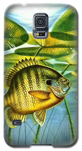 Galaxy S5 Case featuring the painting Blugill And Lilypads by Jon Q Wright
