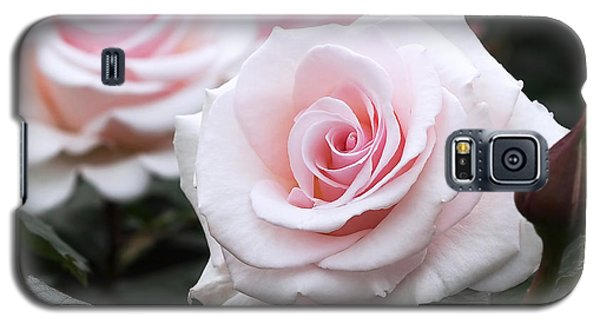 Blush Pink Roses Galaxy S5 Case