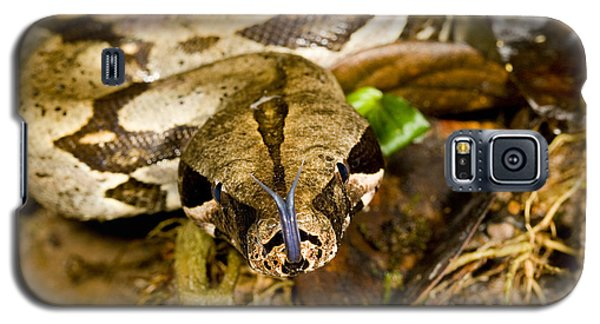 Boa Constrictor Galaxy S5 Case by Gregory G. Dimijian, M.D.
