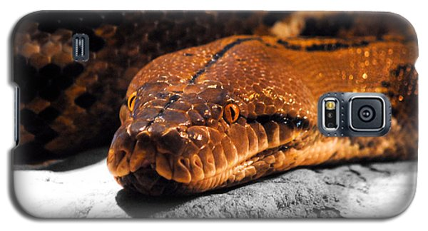 Boa Constrictor Galaxy S5 Case by Jai Johnson