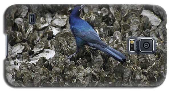 Galaxy S5 Case featuring the photograph Boat-tailed Grackle Feeding by Jeanne Kay Juhos