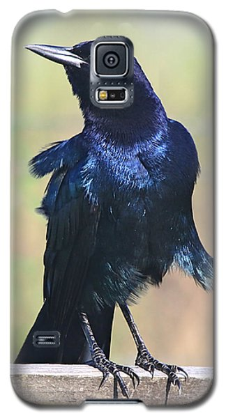 Boat-tailed Grackle Galaxy S5 Case