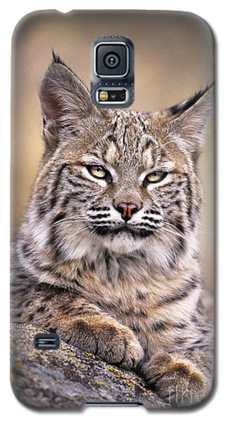 Bobcat Cub Portrait Montana Wildlife Galaxy S5 Case