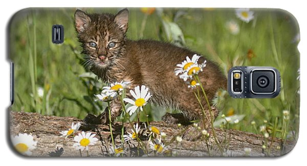 Galaxy S5 Case featuring the photograph Bobcat Kitten In The Flowers by Myrna Bradshaw