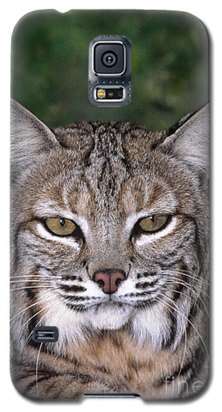 Bobcat Portrait Wildlife Rescue Galaxy S5 Case